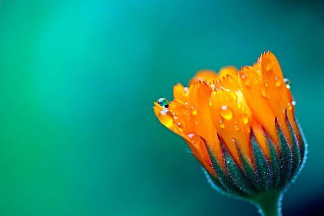Psicología color naranja